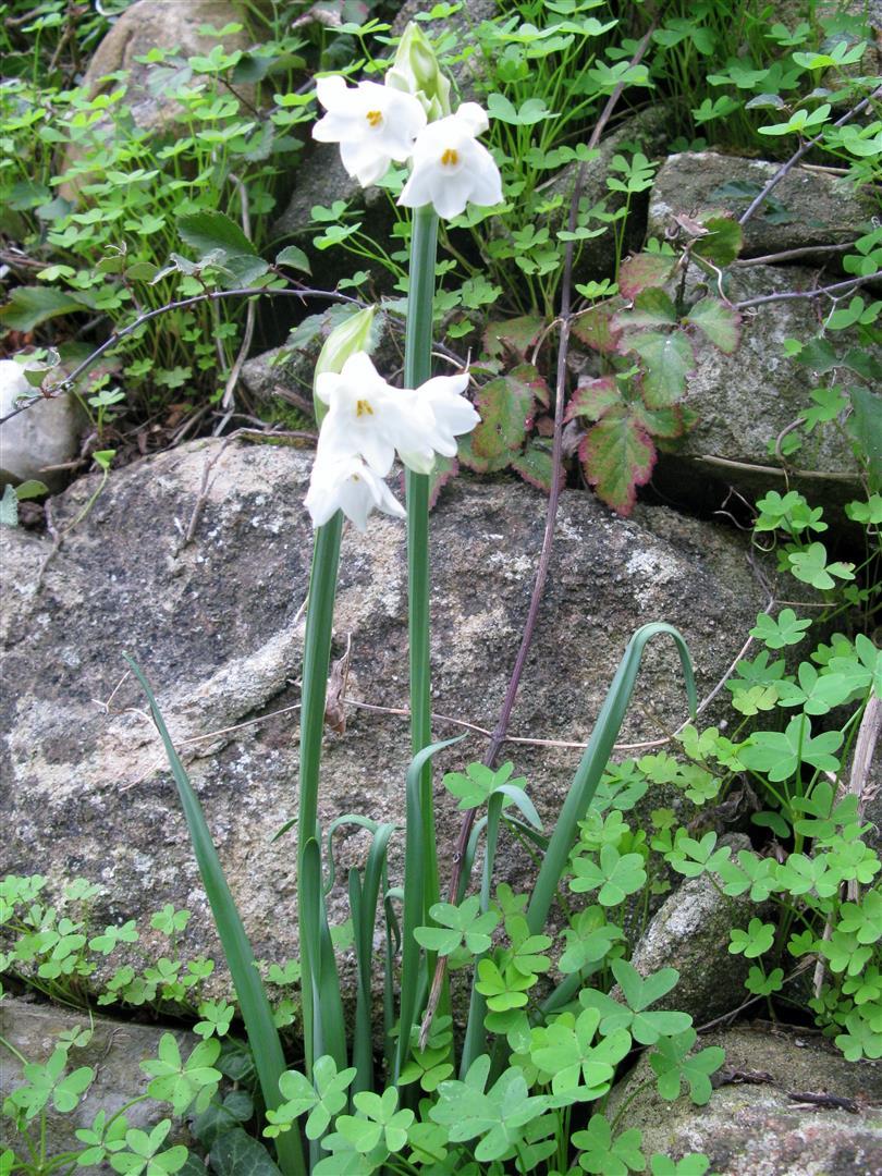 12-d%c3%a9cembre-fleurs-2012-4-jpg