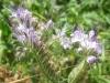 03-mars-fleurs-2012-jpg