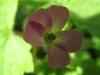 03-mars-fleurs-2013-10-jpg