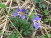 03-mars-fleurs-2013-3-jpg