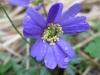 03-mars-fleurs-2013-4-jpg