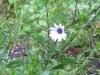 03-mars-fleurs-2013-5-jpg