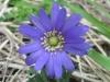 03-mars-fleurs-2013-7-jpg
