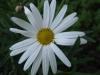 04-avril-fleurs-2013-10-jpg