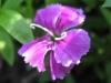 04-avril-fleurs-2013-13-jpg