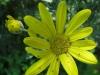 04-avril-fleurs-2013-15-jpg