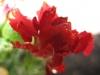04-avril-fleurs-2013-18-jpg