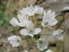 04-avril-fleurs-2013-2-jpg