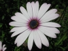 04-avril-fleurs-2013-21-jpg