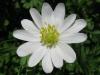 04-avril-fleurs-2013-22-jpg