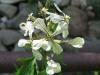 04-avril-fleurs-2013-24-jpg