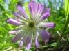 04-avril-fleurs-2013-25-jpg