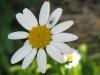 04-avril-fleurs-2013-28-jpg