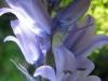 04-avril-fleurs-2013-29-jpg