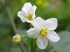 04-avril-fleurs-2013-32-jpg
