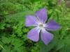 04-avril-fleurs-2013-4-jpg