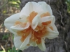 04-avril-fleurs-2013-7-jpg