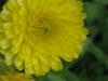 05-mai-fleurs-2013-25-jpg