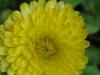 05-mai-fleurs-2013-26-jpg