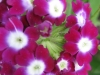05-mai-fleurs-2013-31-jpg