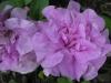 05-mai-fleurs-2013-35-jpg