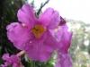05-mai-fleurs-2013-44-jpg