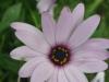 05-mai-fleurs-2013-5-jpg