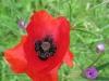 05-mai-fleurs-2013-7-jpg