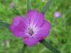 05-mai-fleurs-2013-8-jpg