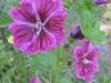 06-juin-fleurs-2012-1-jpg