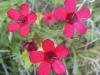 06-juin-fleurs-2012-2-jpg