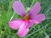 06-juin-fleurs-2012-5-jpg
