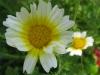 06-juin-fleurs-2012-7-jpg