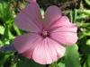 07-juillet-fleurs-2012-1-jpg