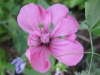 07-juillet-fleurs-2012-10-jpg