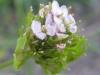 07-juillet-fleurs-2012-12-jpg