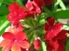 07-juillet-fleurs-2012-2-jpg