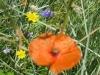 07-juillet-fleurs-2012-20-jpg