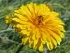 07-juillet-fleurs-2012-21-jpg