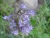 07-juillet-fleurs-2012-30-jpg