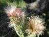 07-juillet-fleurs-2012-31-jpg