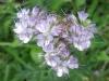 07-juillet-fleurs-2012-32-jpg