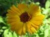 07-juillet-fleurs-2012-34-jpg