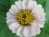 07-juillet-fleurs-2012-4-jpg
