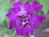 07-juillet-fleurs-2012-5-jpg