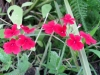07-juillet-fleurs-2012-6-jpg