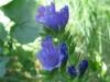 07-juillet-fleurs-2013-2-jpg