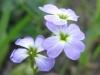 07-juillet-fleurs-2013-8-jpg