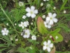 07-juillet-fleurs-2013-9-jpg