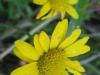10-octobre-fleurs-2013-38-jpg